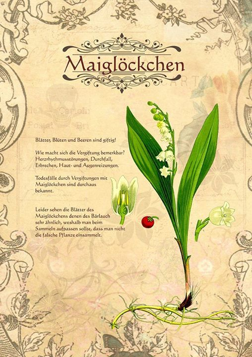Maiglöckchen http://www.kraeuter-verzeichnis.de/