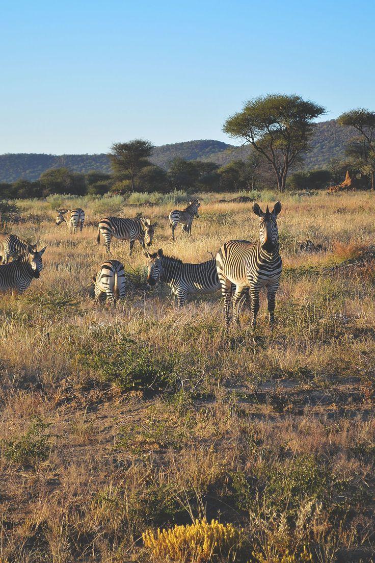 Okonjima Game Reserve   heneedsfood.com