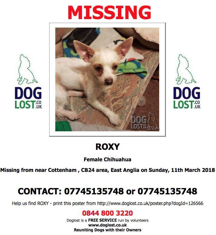 Http Doglost Co Uk Lost Roxy Female Chihuahua Cottenham Cambridge Cb24 Sunday 11th March 2018 Lostdog Scanme Http Www Doglost Co Uk Dog Blog