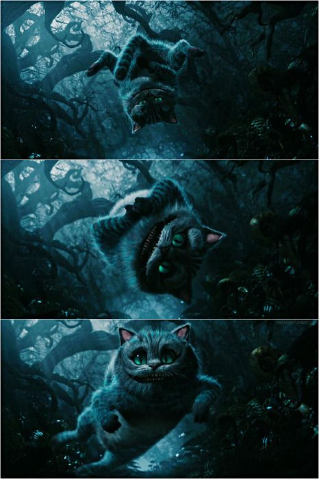 cheshire cat, he's so adorable I wish Cheshire cats actually looked him. <3