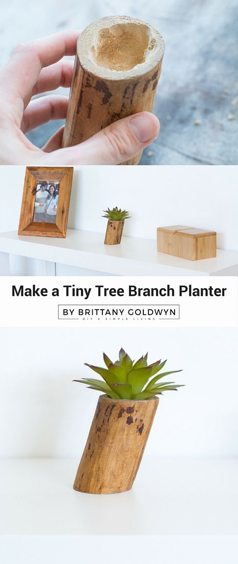 Make a Tiny Tree Branch Faux Planter....super cheap and easy home decor idea, just go outside and grab a branch!