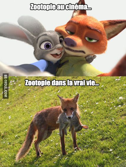 Zootopie dans la vrai vie... #disney #film #animaux
