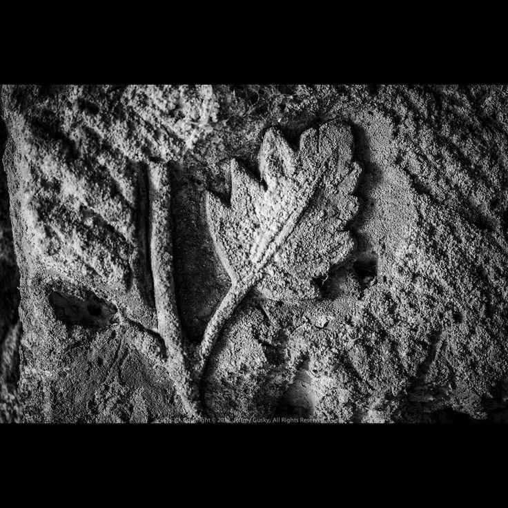 01/12/18 Hidden World of World War I Photo Update