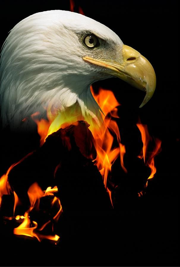 Eagle Fire Related Keywords Amp Suggestions American Eagle Fire Bald Eagle Bald Eagle Tattoos Eagle