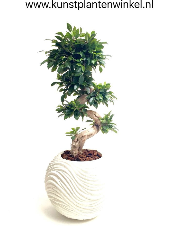Bonsai kunstplant / Bonsai artificial plant
