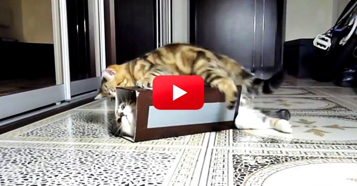 More Cat-In-Box Silliness. I Can't Get Enough Of This Stuff | The Animal Rescue Site Blog
