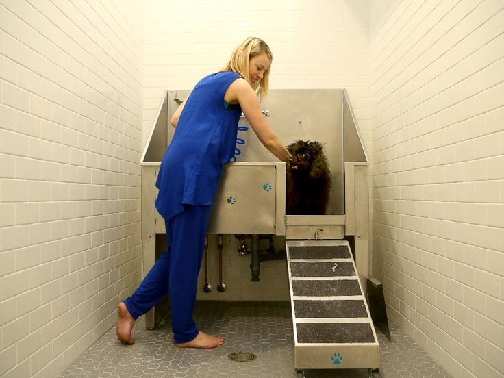 Condo Scene by Marilyn Wilson: Cathedral Hill joins trend in pet-friendly spaces with dog-washing station #ottawacondos #condoamenities