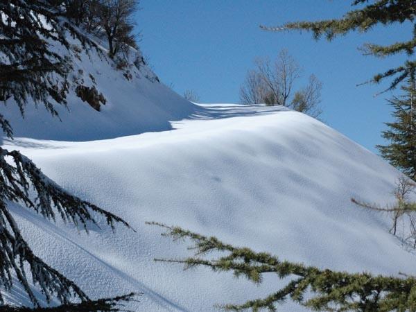 beautiful snow in lebanon shouf cedar reserve