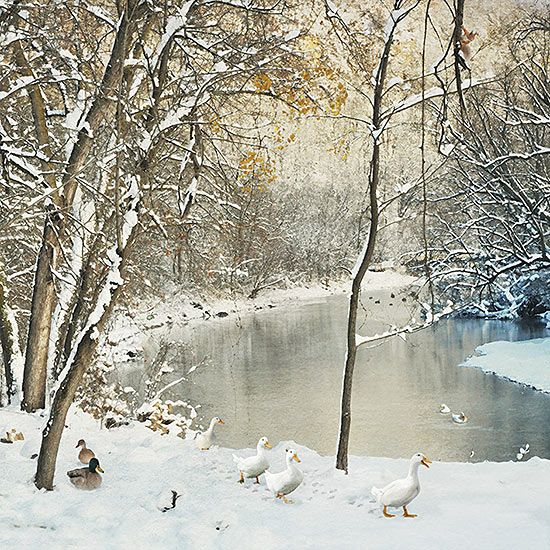 Duck River - christmas card design by Jane Crowther for Bug Art greeting cards