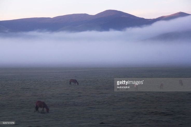 A Trans Mongolia Train Window View of horses grassing on steppe.