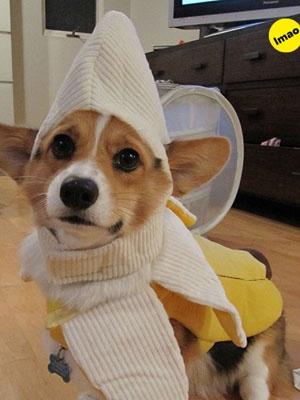 135 best Puppies images on Pinterest Puppies, Dog stuff and Animals - photo editor job description