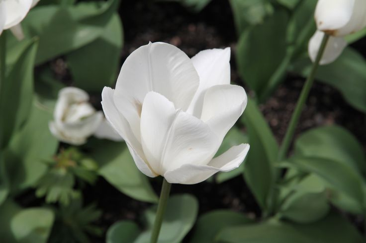 Flowers inOslo