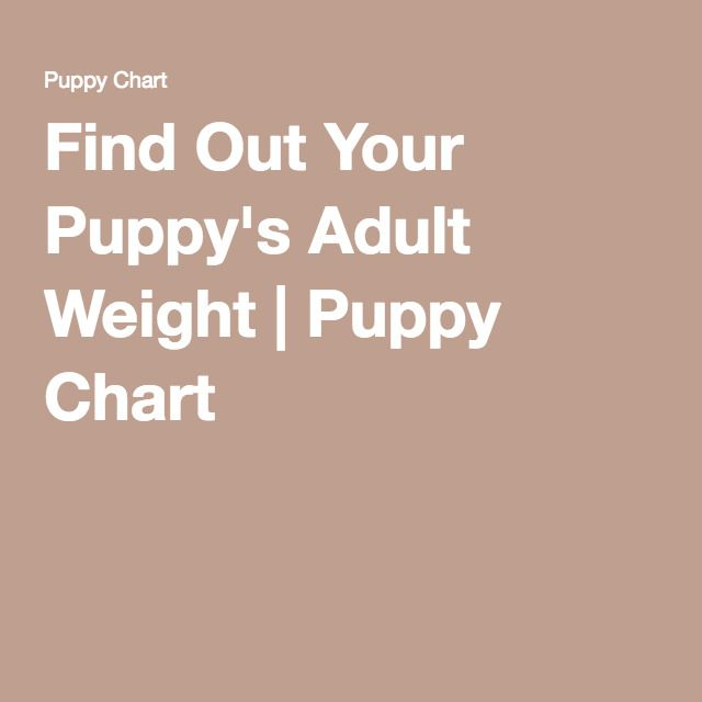 Find Out Your Puppy's Adult Weight