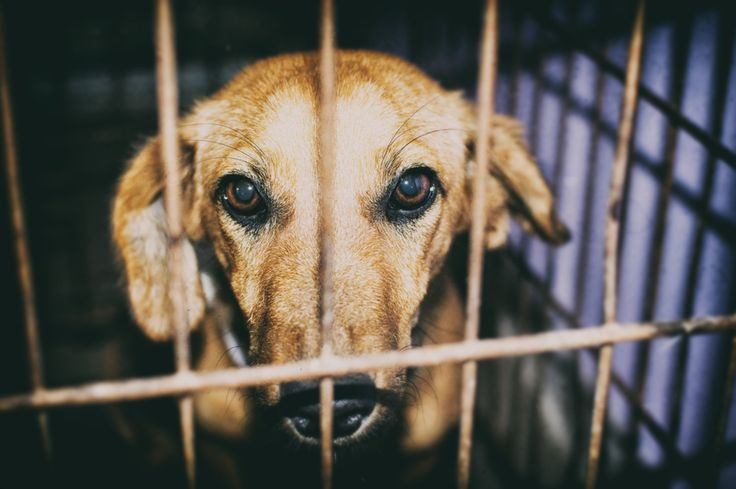 <p>Sign this petition on Care2 to urge your Congressional Representatives to cosponsor this resolution and call on the Chinese government to end the dog meat trade.</p>