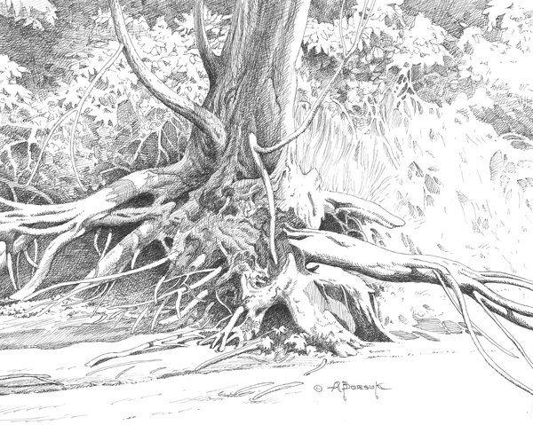 tree drawing 6 http://hative.com/tree-drawings/