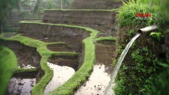 Subak: Sistem Pengairan Sawah (irigasi) Tradisional Bali
