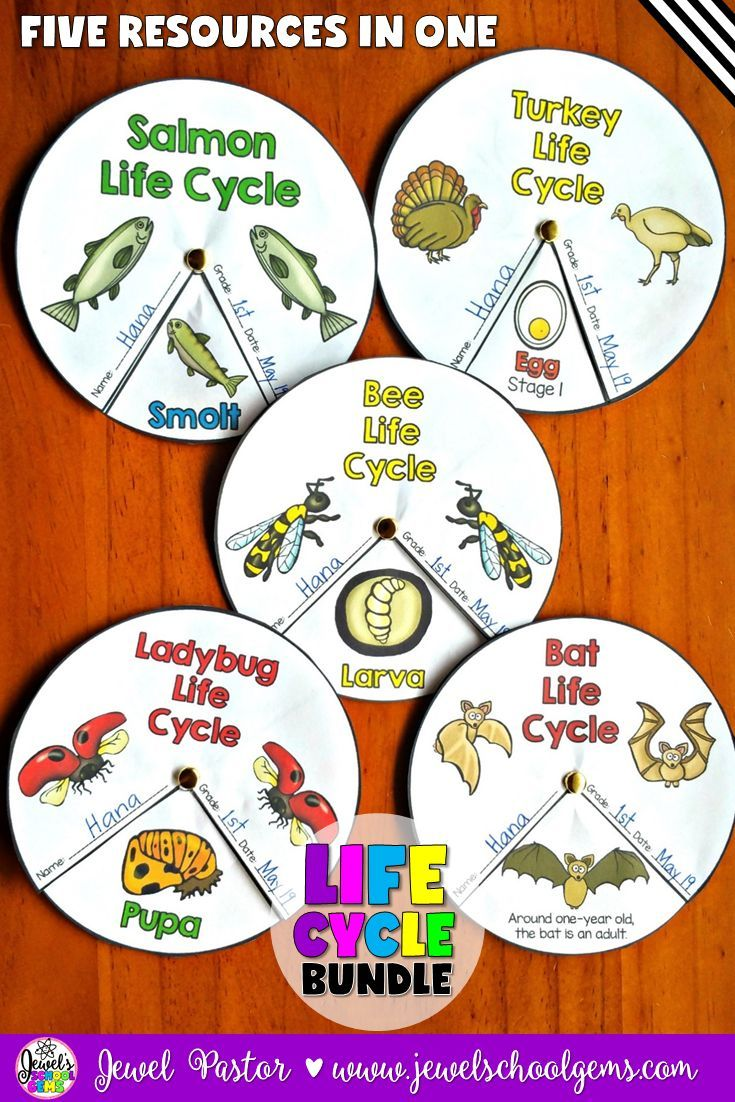 Life Cycles Bundle (Bats, Bees, Ladybugs, Salmon and Turkey) by Jewel Pastor…