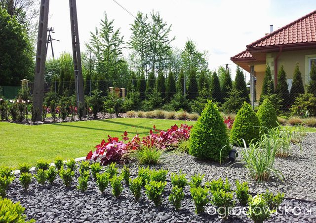 Moja codzienność - ogród Oli - strona 748 - Forum ogrodnicze - Ogrodowisko