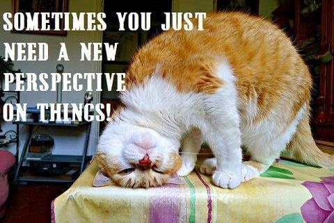 via Yes I Like Cats (on Facebook): Cats, Animals, Quotes, Pet, Funny, Perspective, Things, Photo, Kitty