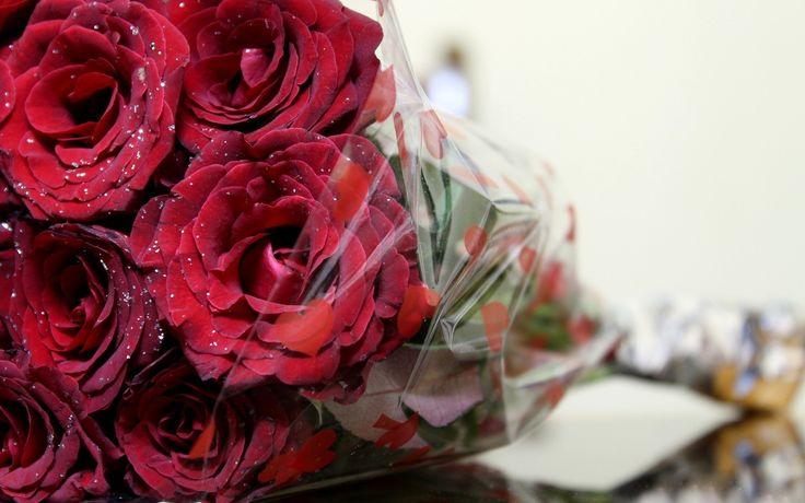rose hd wallpaper - rose category
