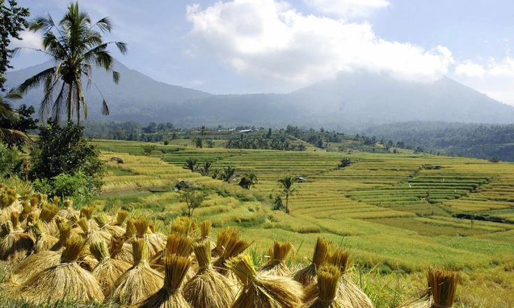 Tailored Indonesia Tours Backyard Travel