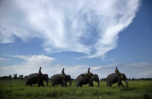 Mahouts guide forest department elephants to demolish houses at Bandardubi village, on the periphery of the Kaziranga National Park, northeastern Assam state, India, on September 19, 2016. Authorities ordered the demolition of around 300 houses in three villages to evict people living on the periphery of the rhino sanctuary to stop rampant poaching of the rare animal, a top police official said.