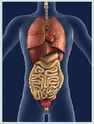 Erzijn probiotica geïdentificeerd die SIBO (bacteriële overgroei in de dunne darm) uitschakelen wanneer ergelijktijdig ooksprake is van het prikkelbare darmsyndroom, meldt Gastroenterology and E…