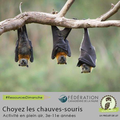 Cette semaine, pour #RessourcesDimanche de #R4R.ca, «Choyez les chauves-souris». Cette ressource démontre les étapes pour construire un abri artificiel pour des colocataires, des oiseaux et des chauves-souris.   Regardez l'activité à