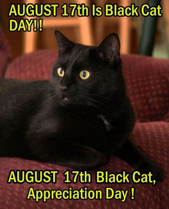 Black Cat Appreciation Day 2018 Is On Friday August 17 2018 Did You Know August 17th Is Black Cat Appreciation Day Black Cat Appreciation Day Black Cat Day Cats