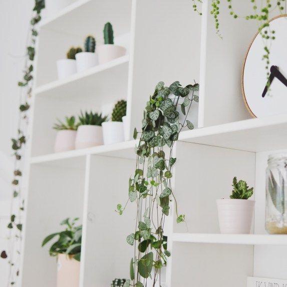 Planten Decoratie Binnen