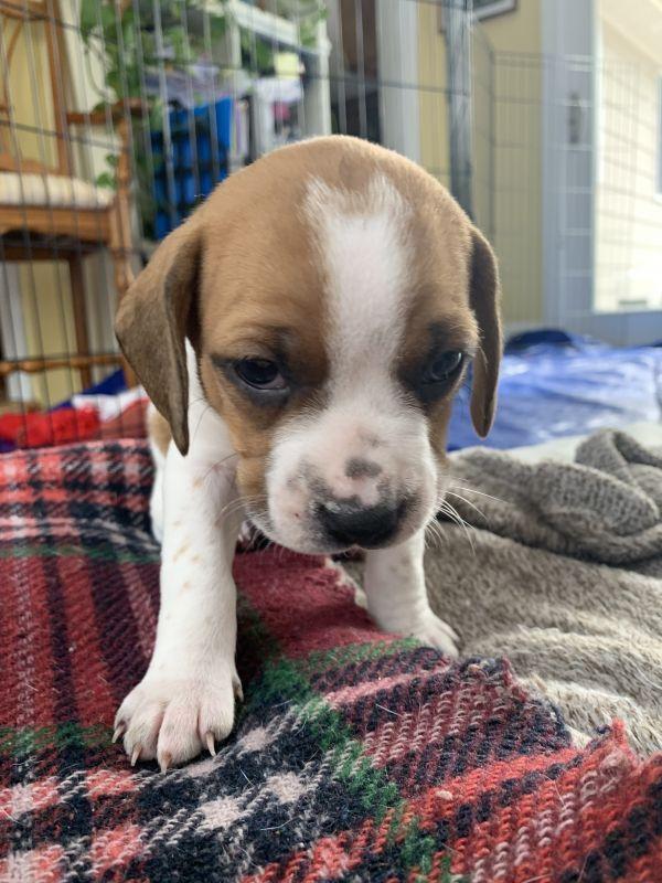 Dogs For Adoption Petfinder Dog Adoption Dogs Pets