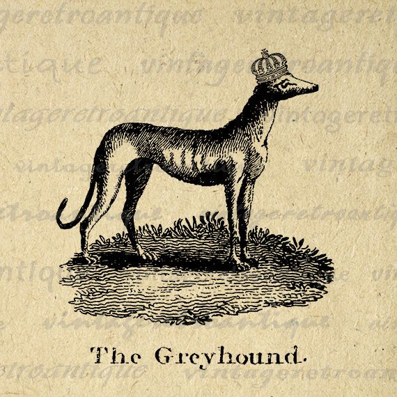Printable Digital Greyhound with Crown Download Dog Graphic Illustration Image Vintage Clip Art Jpg Png Eps 18x18 HQ 300dpi No.1082 @ vintageretroantique.etsy.com #DigitalArt #Printable #Art #VintageRetroAntique #Digital #Clipart #Download