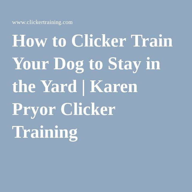 25 B Sta Alpha Dog Training Id Erna P Pinterest Tips