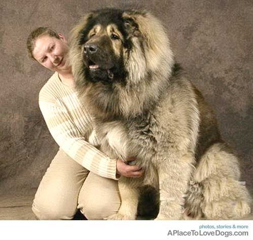 what a magnificent head of hair and what a HUGE dog!