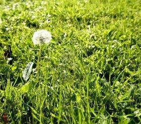 6 Fast & Natural Ways to Kill Weeds