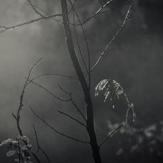 A Sense of Foreboding by Alex Ettinger