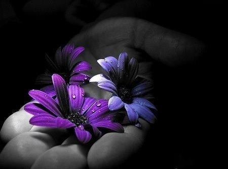 Purple flowers color splash black and white with - Plants with blue flowers a splash of colors in the garden ...