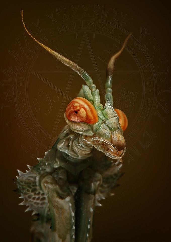 Alien-like Mantis.  (Igor Siwanowicz, Blepharopsis at Deviant Art.)