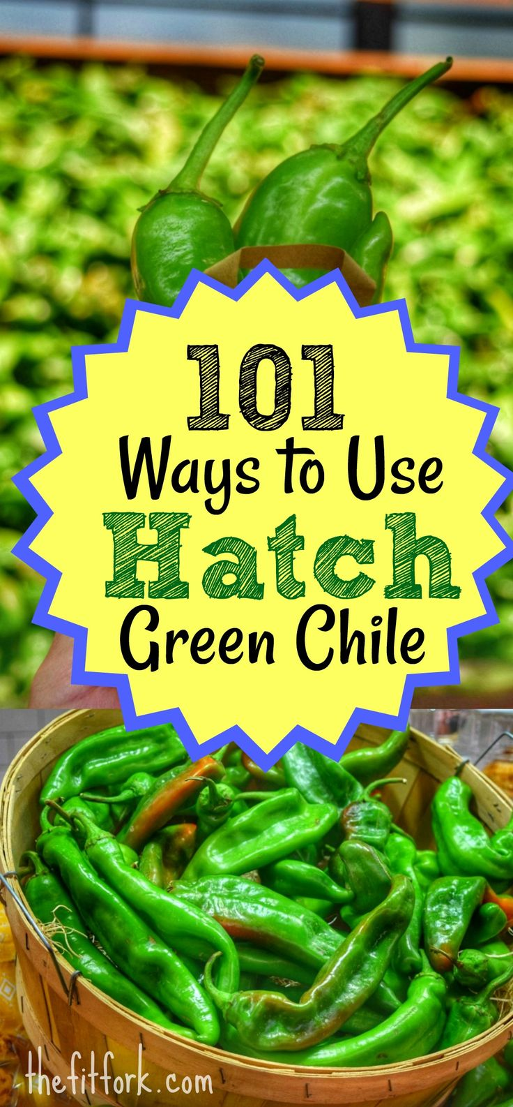 101 Ways to Use Hatch Green Chile - this versatile pepper from New Mexico has meaty flesh and mild to medium-hot heat that lends perfectly to many dishes (from salsas and stews to meats and dessert treats) Learn how to roast them in the oven and grill and get creative ideas on how to enjoy them now and all year long. And don't miss the Hatch Chile Festival at Central Market #LandofEnchantment #Ad