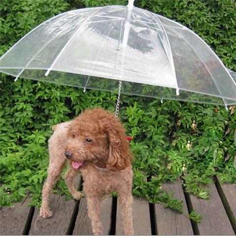 Transparent Dog Umbrella With Built In Leash