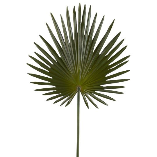 <div>Create a beautiful space in your home with this green fan palm stem. Surround yourself with...
