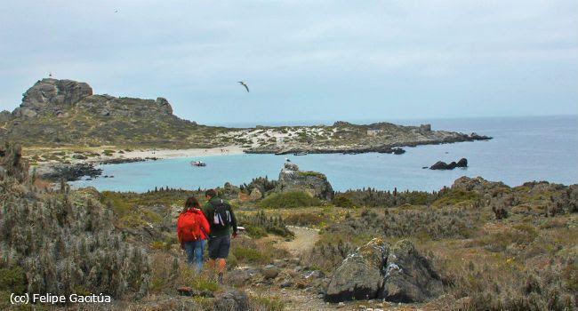 Reserva Nacional Pinguino de Humboldt: Un paraíso en las costas del norte. turismonacional.cl