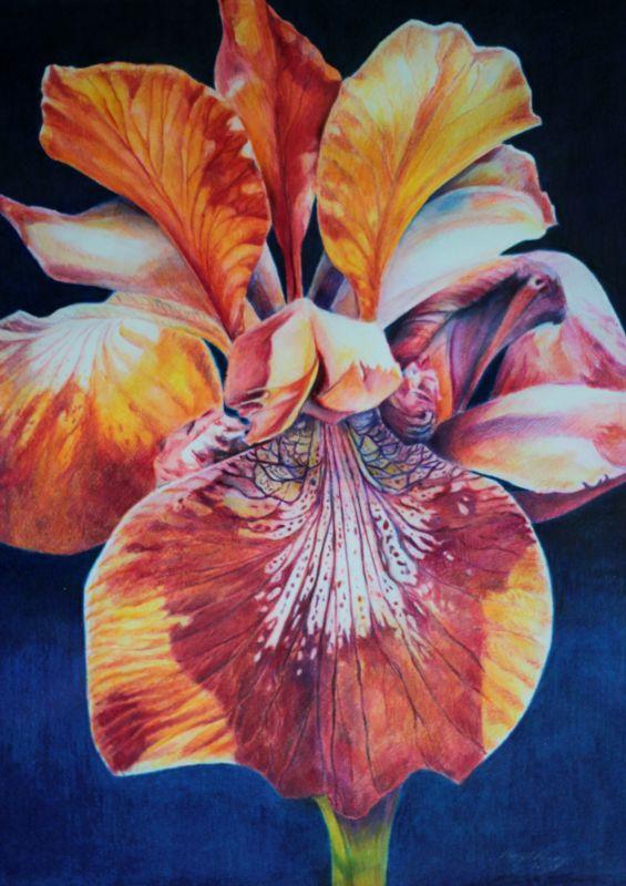 Amy Rebella   COLORED PENCIL over watercolor