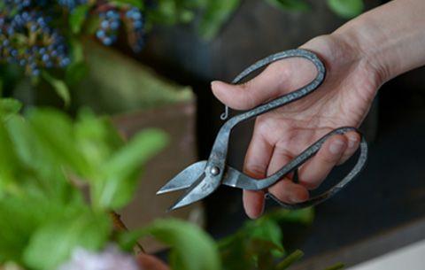 「branch & root shears」 「TAjiKA」の商品 TAjiKA