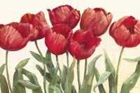 Ruby Tulips Fine Art Print