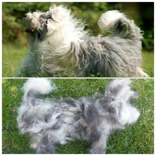 After brushing my husky...