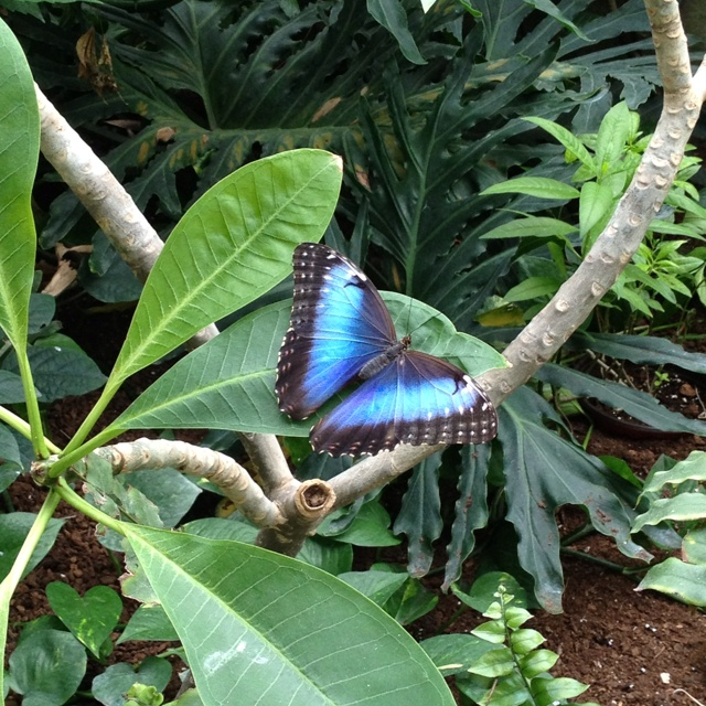 1000 Images About Cambridge Butterfly Coservatory Ontario Canada On Pinterest Wedding Venues