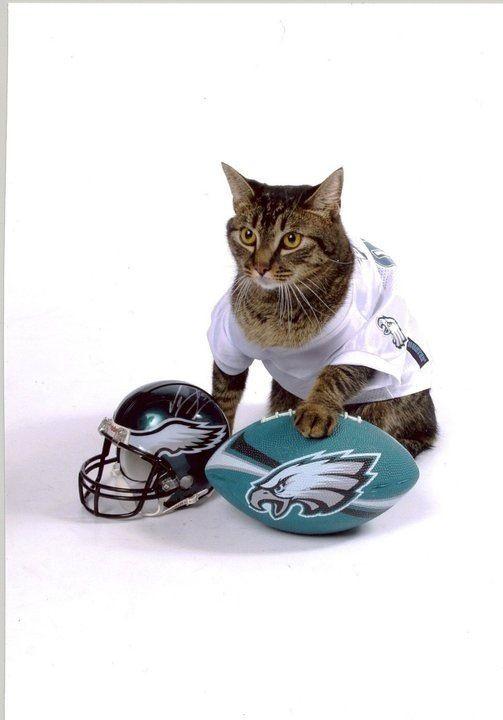 Philadelphia Eagles #FlyEaglesFly Great idea for your next pet portrait