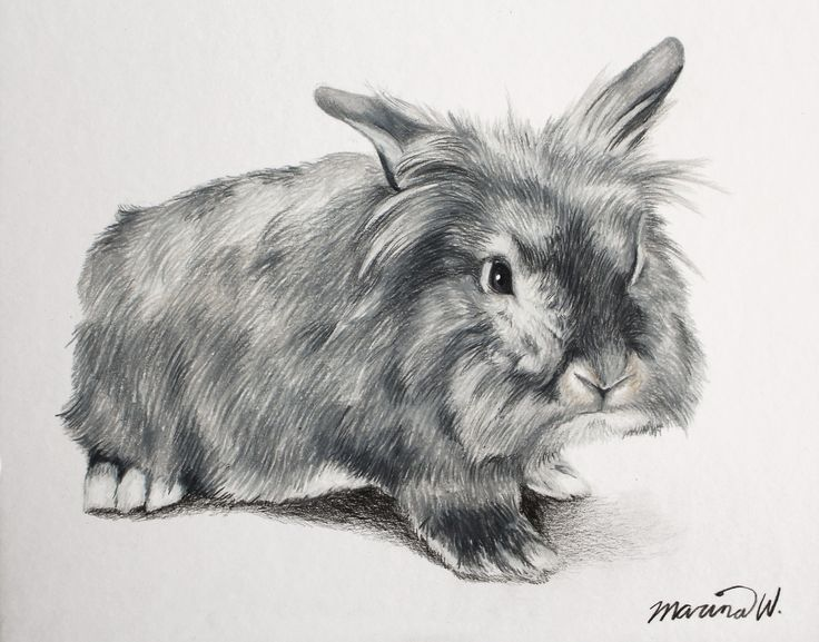 Pet portrait drawing by Marina Williams
