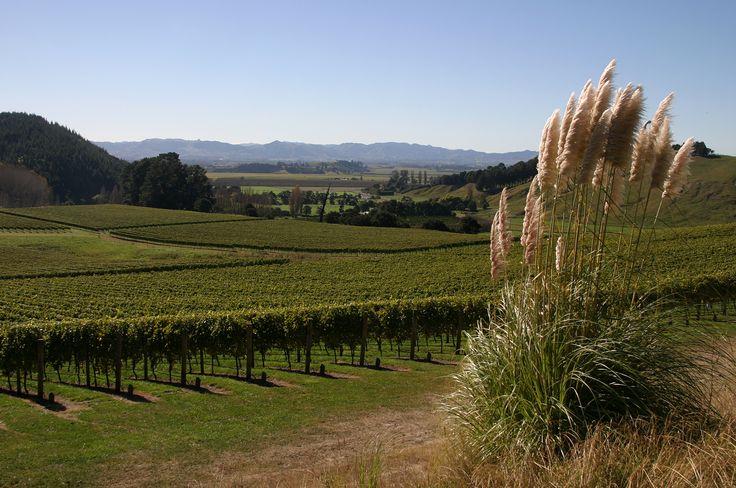 Gisborne Villa Maria Vineyard, Gisborne – New Zealand